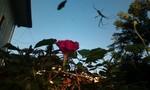 アサガオがまだ咲く今朝の空