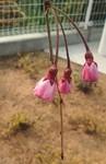 koromama2011-03-23