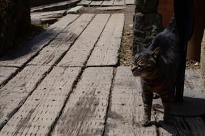 猫の居るギャラリー