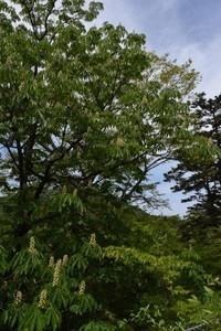 森のシャンデリア