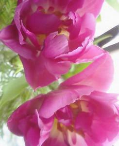 kusaboshi2005-02-07