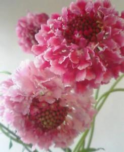 kusaboshi2005-03-10