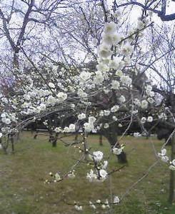 kusaboshi2005-03-11