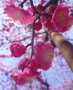 kusaboshi2005-03-19