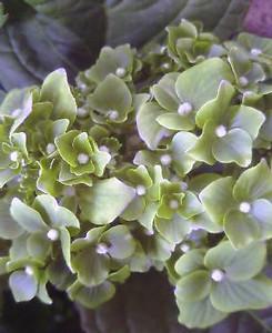 kusaboshi2005-03-31