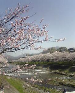 kusaboshi2005-04-09
