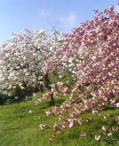 kusaboshi2005-04-25