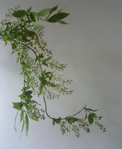 kusaboshi2005-04-30
