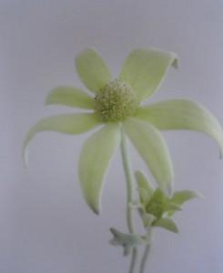 kusaboshi2005-05-24
