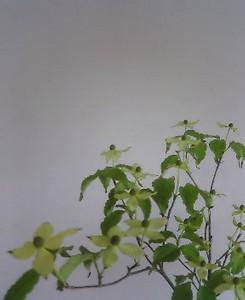 kusaboshi2005-05-30