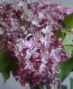 kusaboshi2005-06-01