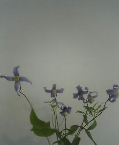 kusaboshi2005-07-04
