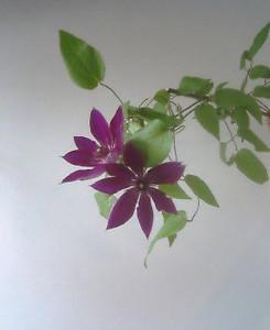 kusaboshi2005-07-05