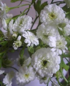 kusaboshi2005-07-15