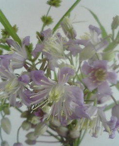 kusaboshi2005-07-25