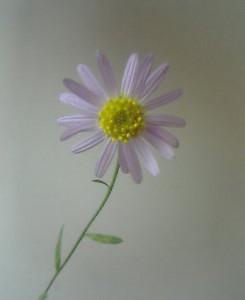 kusaboshi2005-09-16