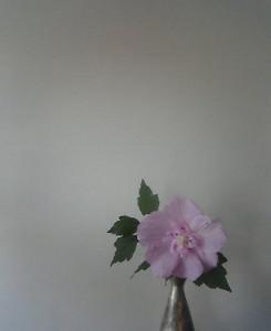 kusaboshi2005-09-17
