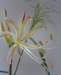 kusaboshi2005-09-23
