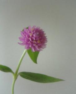 kusaboshi2005-09-29