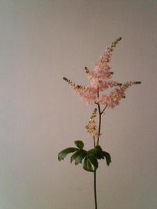 kusaboshi2006-03-18
