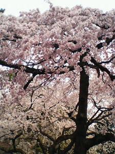 kusaboshi2006-04-02