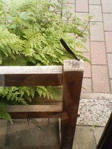 kusaboshi2006-07-13