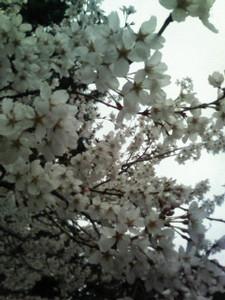 kusaboshi2007-03-30