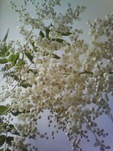kusaboshi2007-06-10