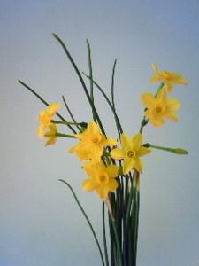 kusaboshi2009-03-22