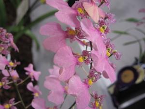 フラワードーム2007