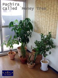 名古屋 観葉植物