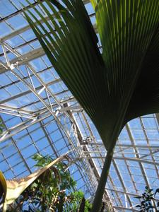 フタゴヤシ 東山植物園 le Soleil(ソ