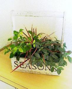 のどか広島店の観葉植物