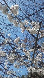 m-tamaki2009-04-04