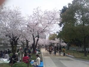 m-tamaki2014-04-26