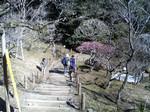 成田山公園梅まつり