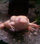 関係ないけど変な蛙