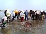 地引網漁1