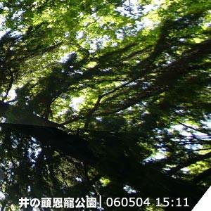 井の頭恩寵公園   060504