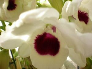 mazennda2009-03-27