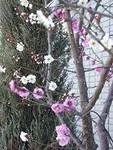 mikawakinta632008-02-16