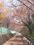 mikawakinta632009-12-26