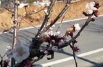 mikawakinta632010-02-09