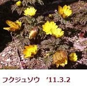 mikawakinta632012-03-04
