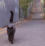 逢引きの 遠い道より 猫帰る