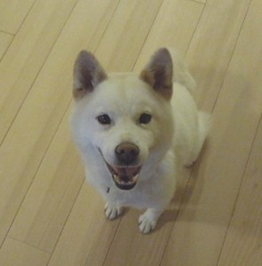 miyuki19672013-12-16
