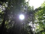 森に差し込む