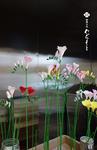 muramoto-wagashi2017-11-27