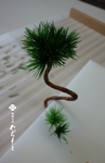 muramoto-wagashi2018-08-26