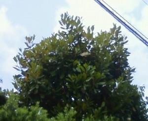 nadeshiko11102011-06-02